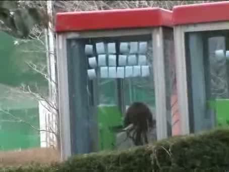 ストーカーに後をつけられていた激カワOLが電話ボックス内でレイプ!【素...